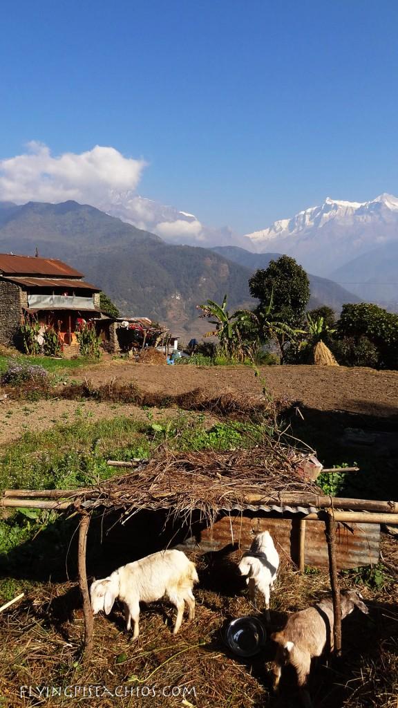 Dampus Trekking Nepal