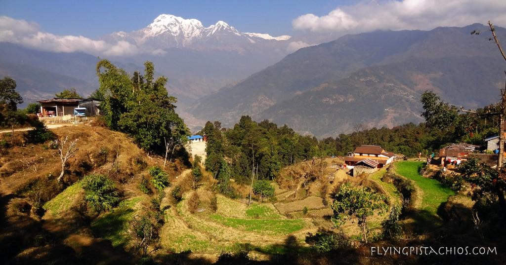 Nepal Rice fields
