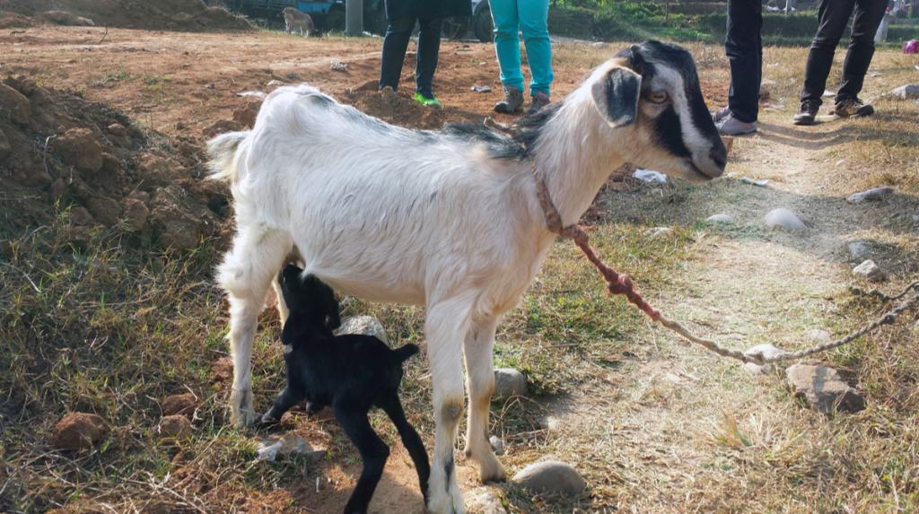 chitwan nepal holiday