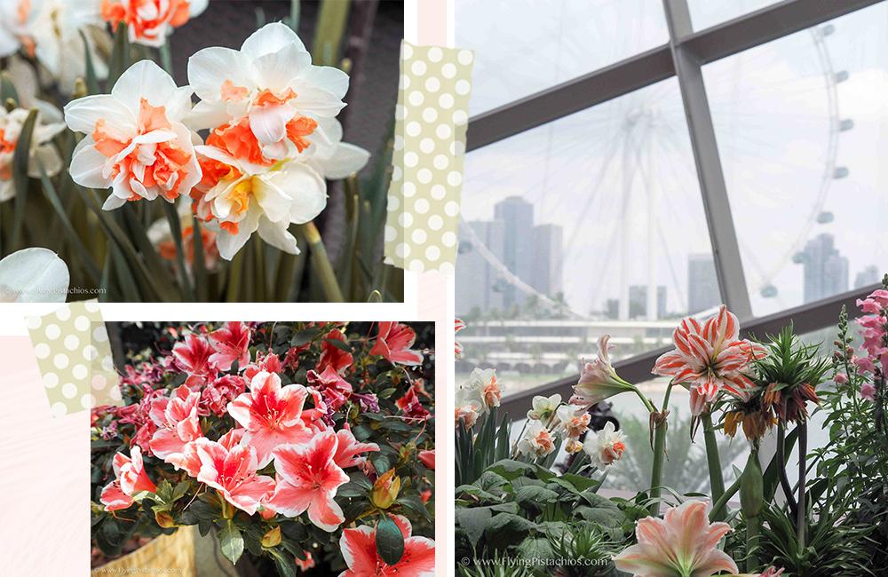 Sakura Singapore