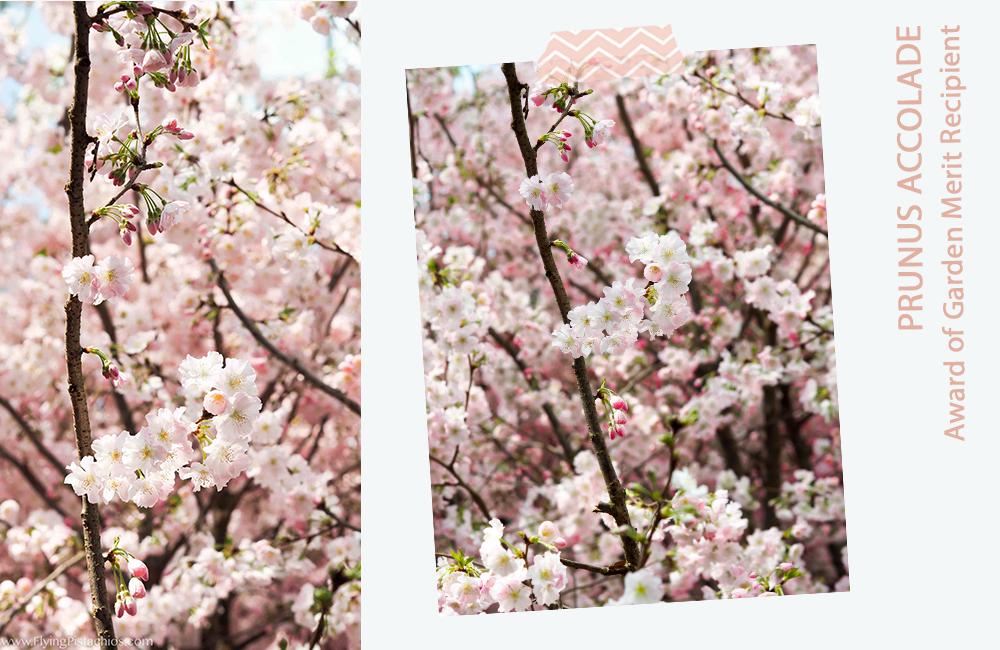 Gardens by the Bay Sakura